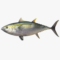 maya yellowfin tuna