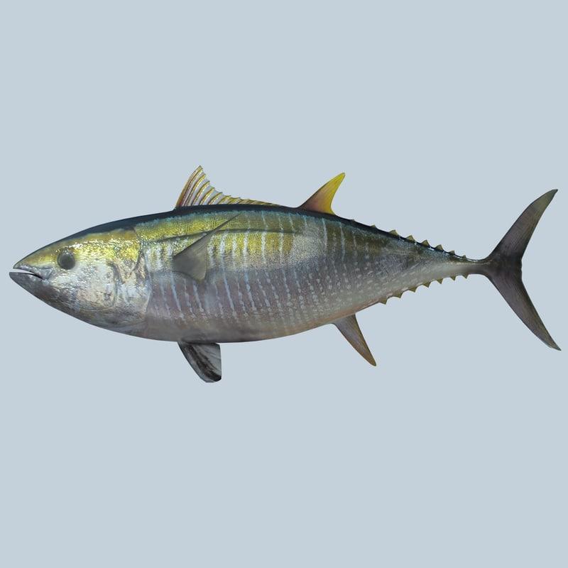 3d Tuna Fish: Max Yellowfin Tuna