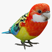 eastern rosella bird 3d model