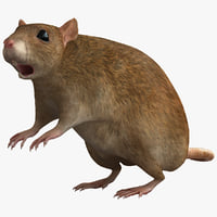 3ds rat rodent modelled