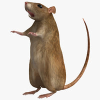max rat modelled