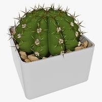 3d gymnocalycium cactus plant
