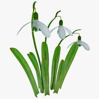 3d galanthus snowdrop plant flower model