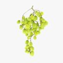grape 3D models