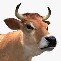 3d model jersey cow fur animation
