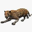 jaguar 3D models