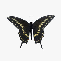 black swallowtail butterfly animation 3d obj