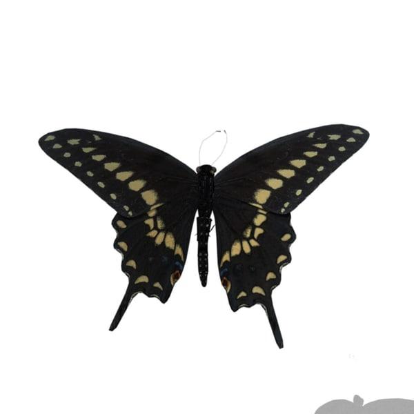 black swallowtail butt...