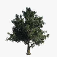 Blue Oak Tree - Game Resolution