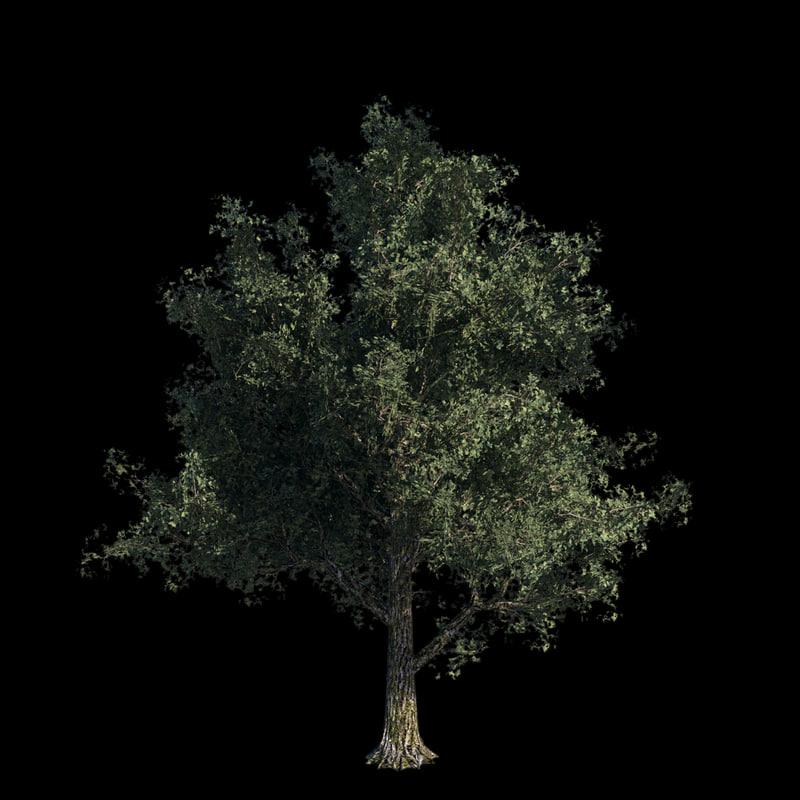 oak_signature_002.jpg