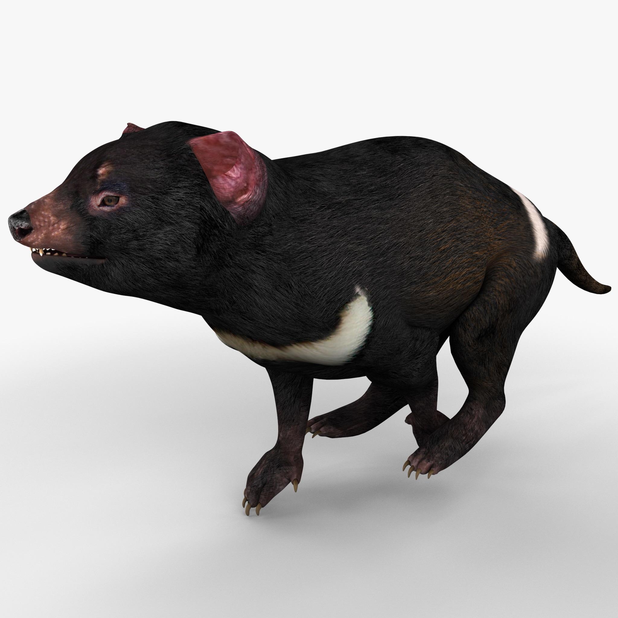 Tasmanian Devil Pose 1_2.jpg