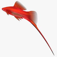 maya swordtail male rigged
