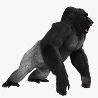 maya gorilla rigged animation