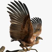 griffon vulture 3d max