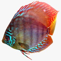 discus fish animation rigged 3d model