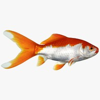 3ds max common goldfish