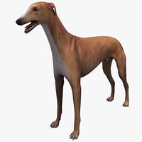 3d model of australian greyhound dog