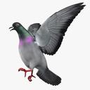 pigeon 3D models
