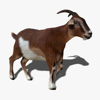 goat hair animation 3d ma
