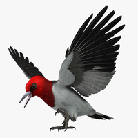 Woodpecker 3D models