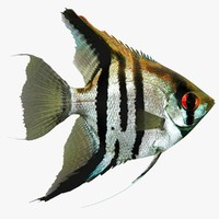 3ds max angelfish scanline