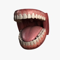 hu teeth 3d model