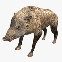 Boar Low Poly