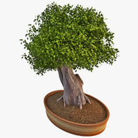 bonsai tree 5 3d obj