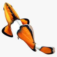 Clownfish (ANIMATED)