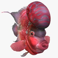 3d model of flowerhorn fish animation
