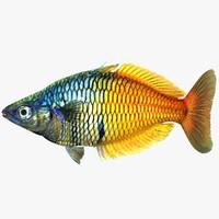 boesemani rainbow 3ds