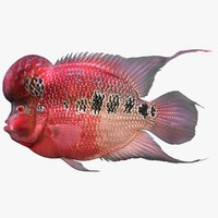 flowerhorn fish 3d 3ds