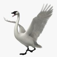 cygnus buccinator trumpeter swan 3d obj