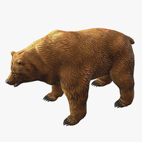 3d model of brown bear
