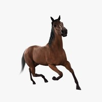 realistic horse 3d model