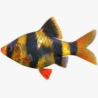 tiger barb 3d 3ds