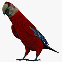 scarlet macaw pose 1 3d model