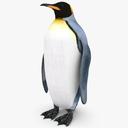 King Penguin 3D models
