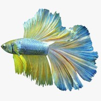 3ds betta blue
