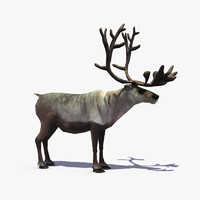 reindeer deer real 3d model