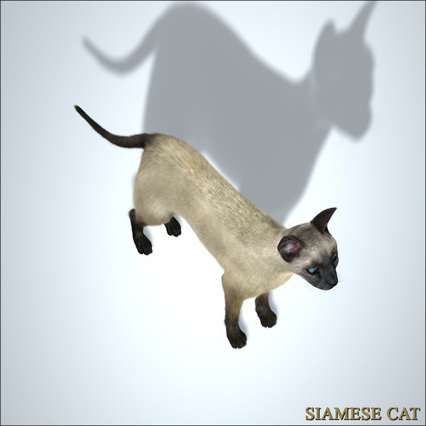 siamese cat 3d model - photo #21