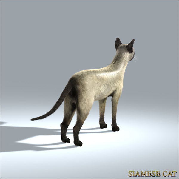 siamese cat 3d model - photo #11