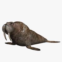 walrus 3ds