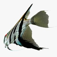 angelfish animation 3d 3ds