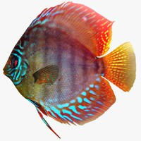 discus fish 3ds