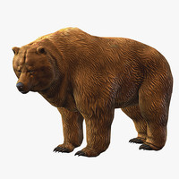 3d model brown bear animation