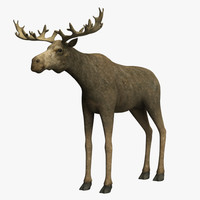 3d model moose animals