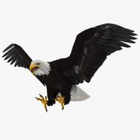 Haliaeetus Leucocephalus 'Bald Eagle'