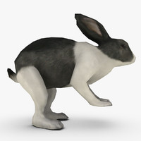 Real Time Textured Rabbit