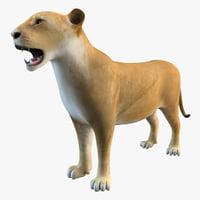 lioness animal 3d max